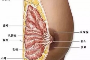 关于乳房的谣言你信过哪些